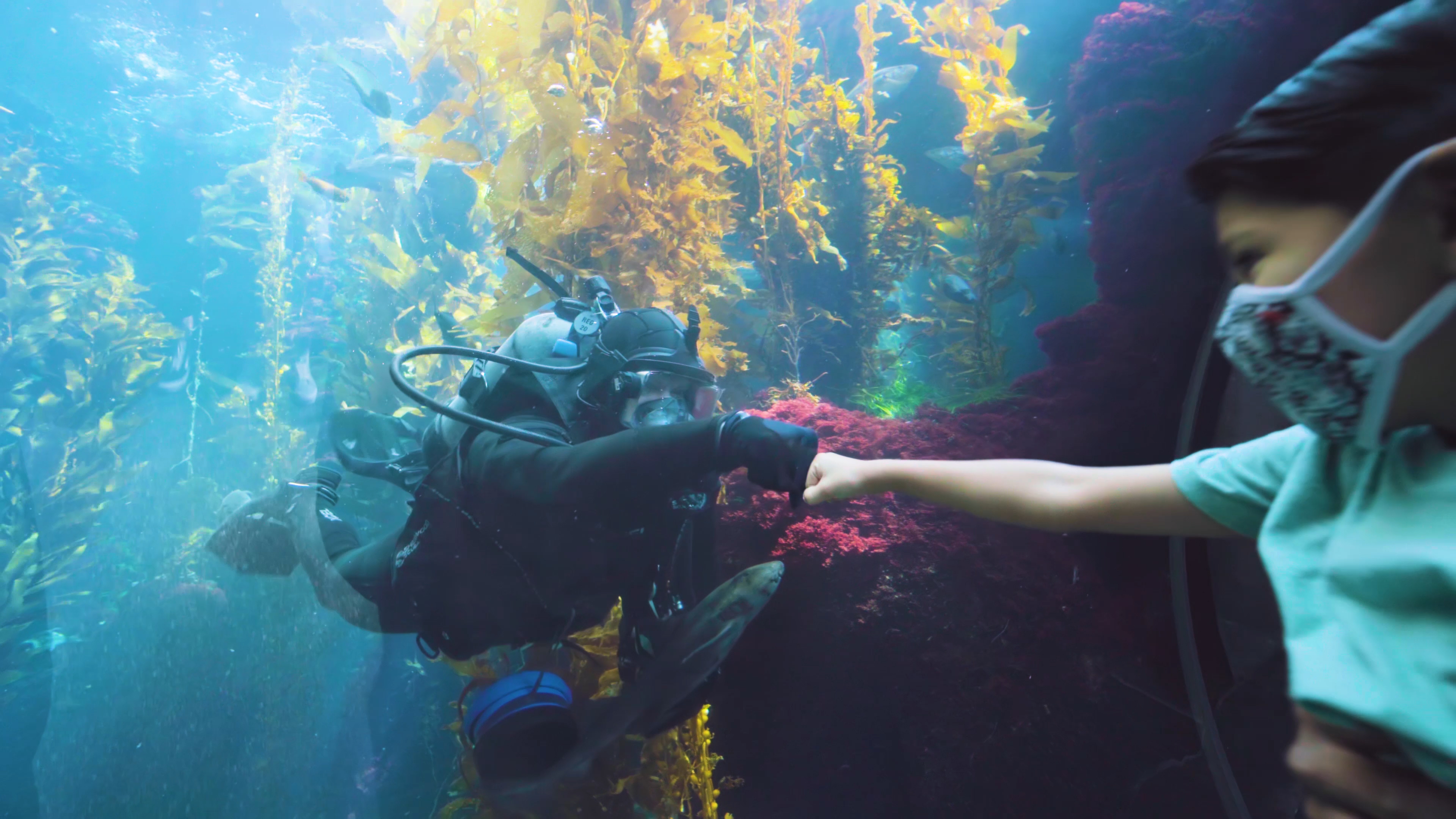A child in a face covering fist bumps a diver through the acrylic window of the Science Center's Kelp Forest habitat.