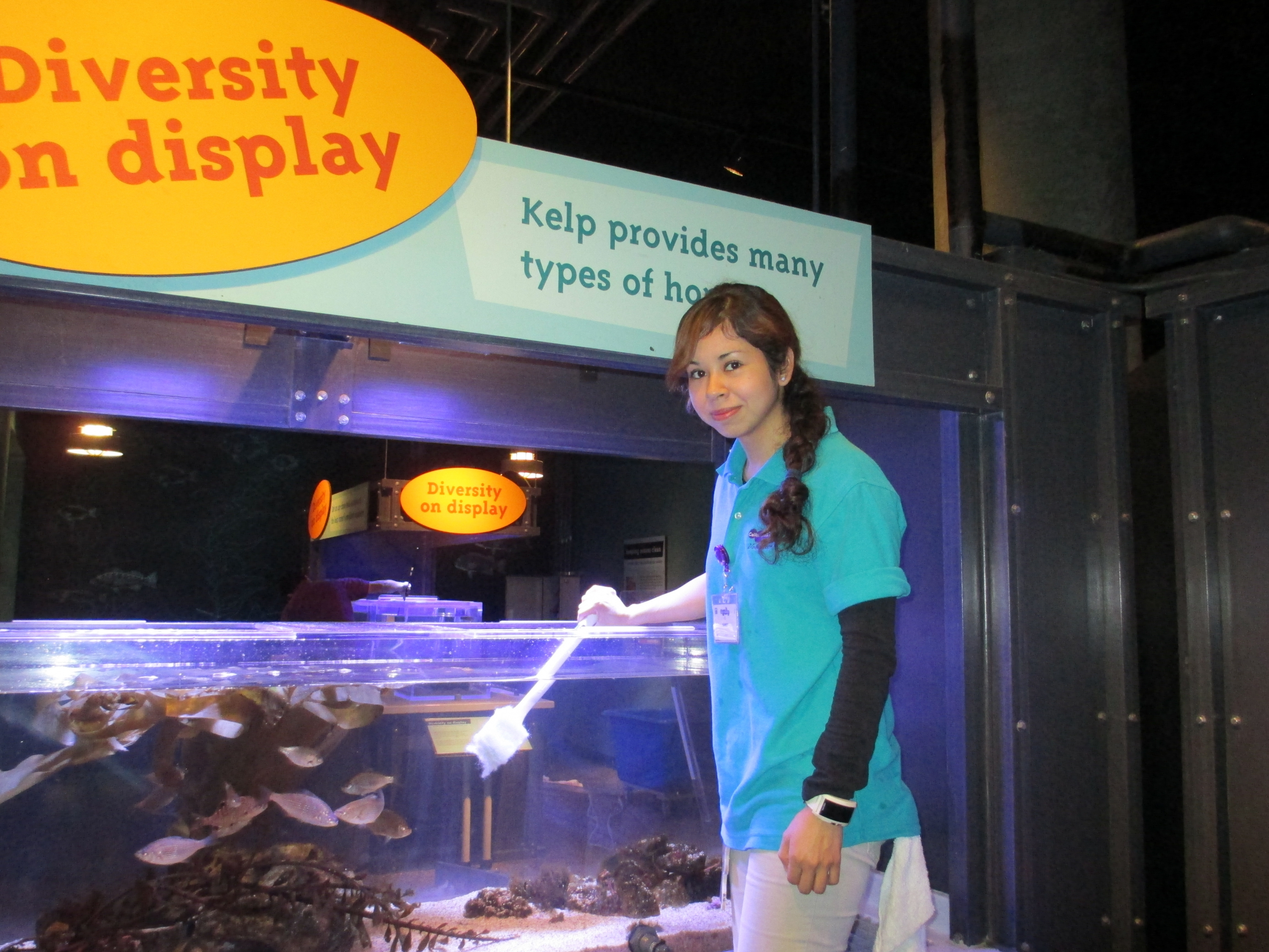 A Science Center Husbandry Volunteer in teal polo uniform cleans Jewel Tank filled with fish in Kelp Forest