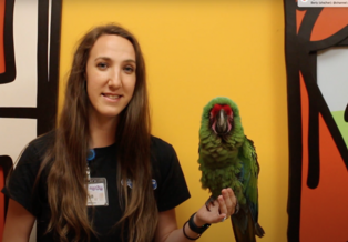 Keeper Erin holds a green military macaw