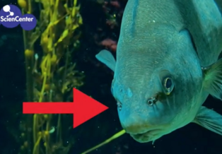 A fish with an arrow pointing at small holes, called nares, in its face