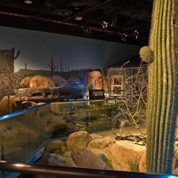 The Desert gallery in the Ecosystems Extreme Zone, with a modeled desert landscape