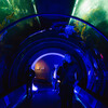 Event guests enter kelp forest tunnel lit in electric blue