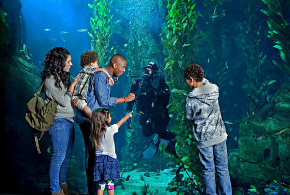 A diverse family greets a diver through the window of the Science Center's Kelp Forest habitat