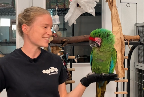 Animal Keeper Louise with a bright green macaw standing in her left hand